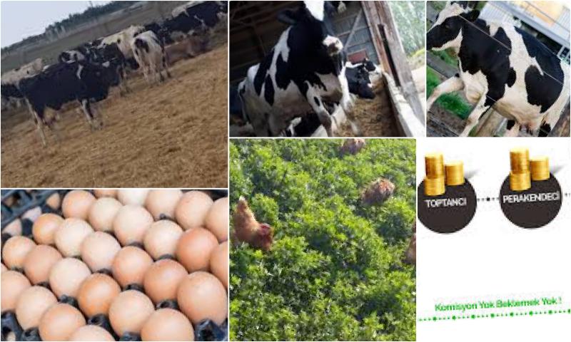 Organik Yumurta Seçimi Nasıl Olmalıdır?