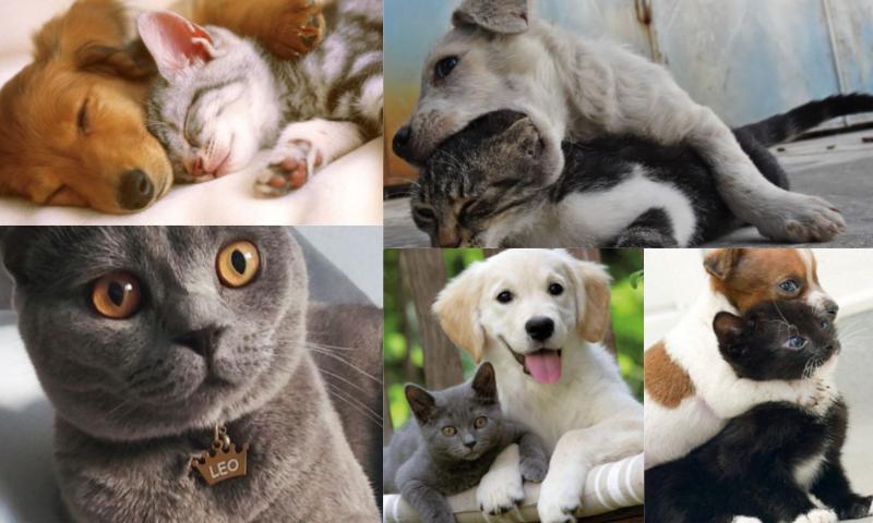Kedi Köpek Ürünlerinde Tercih Edilenler